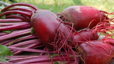 Photo of Why Should You Eat More Beets?